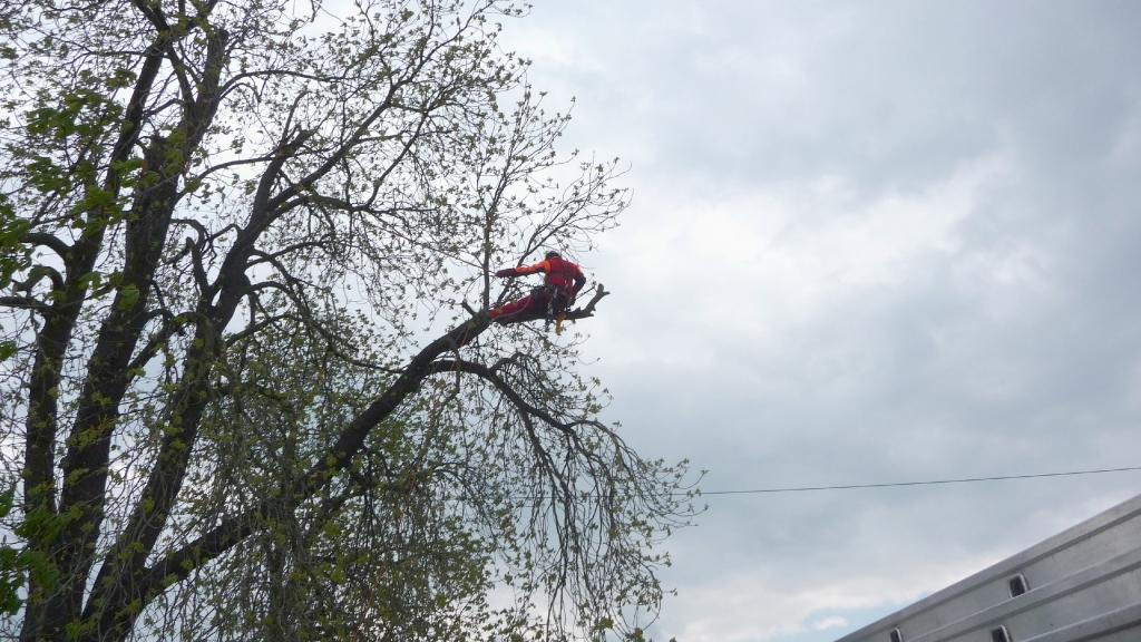 Baumpflege 11