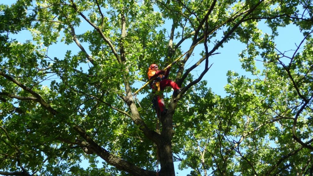Baumpflege 12