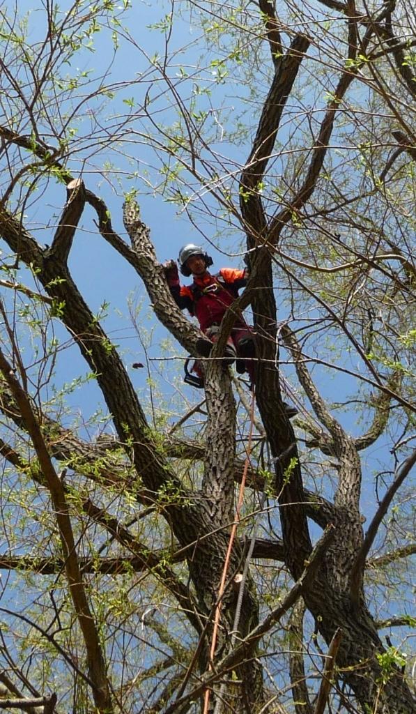 Baumpflege 3