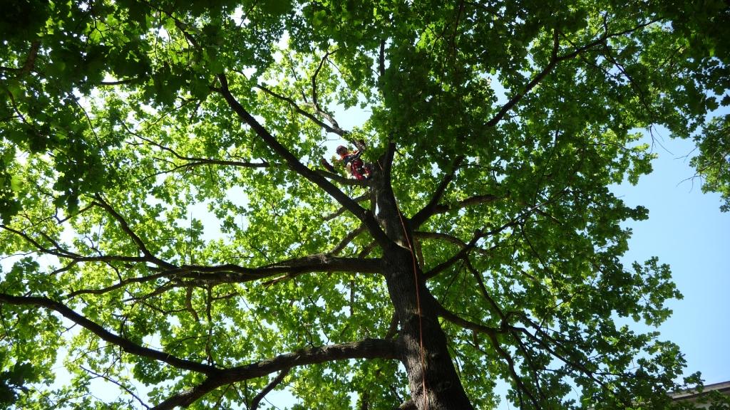 Baumpflege 1