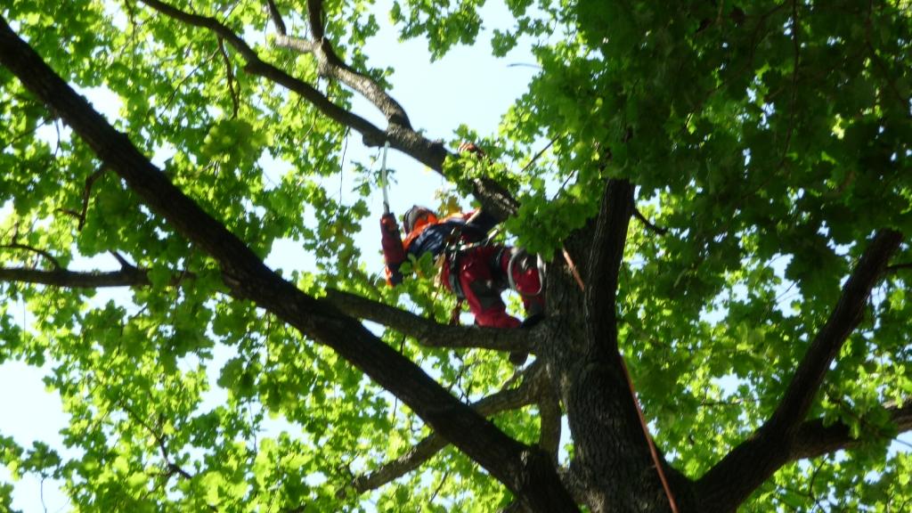 Baumpflege 7