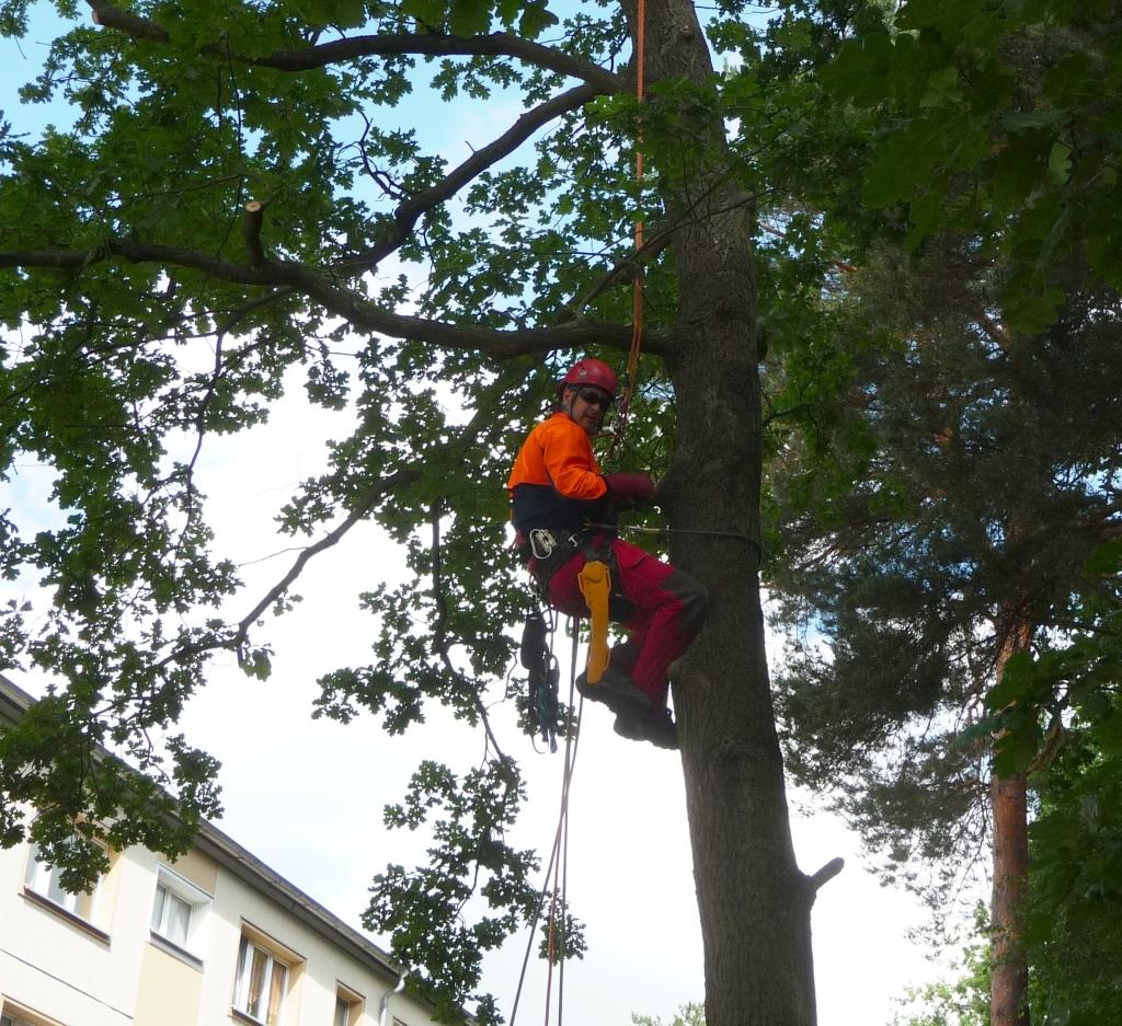 Baumpflege 9