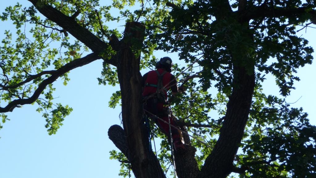Baumpflege Wahrenbrück