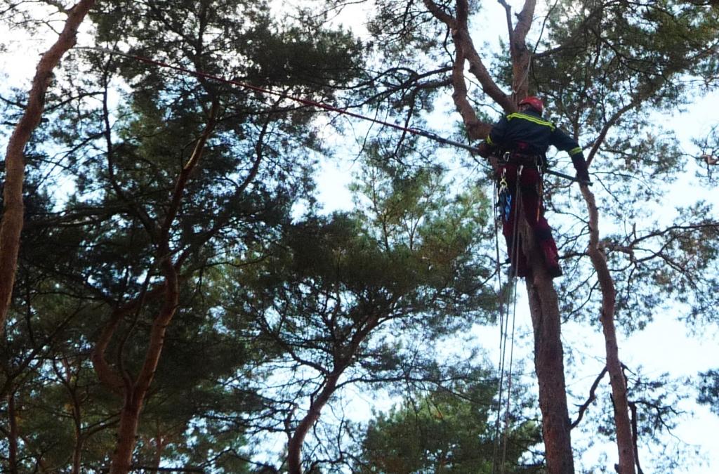 Totholzentfernung 4