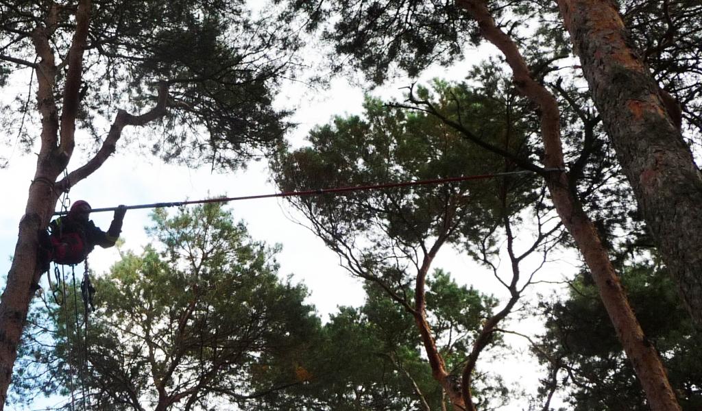 Totholzentfernung 5