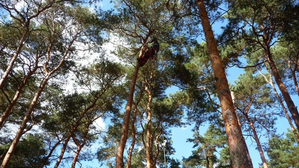 Totholzentfernung 2