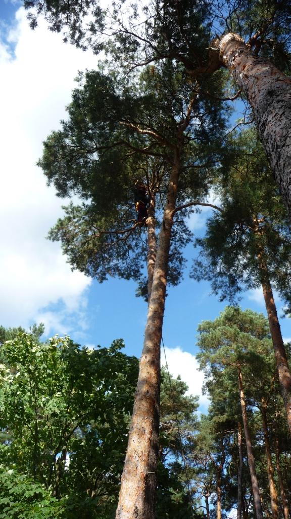 Totholzentfernung 3