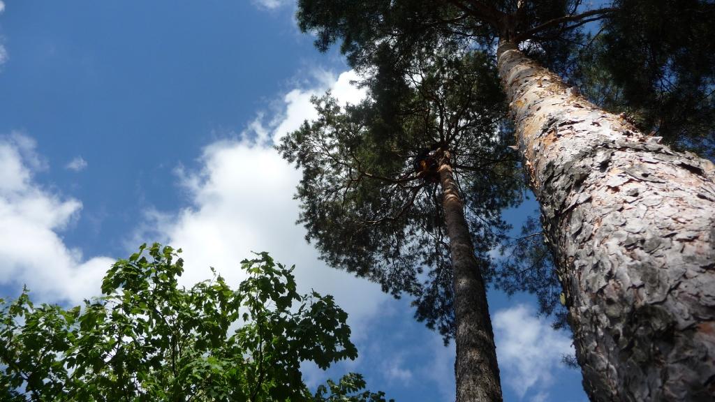 Totholzentfernung 6