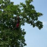Baumpflege 15